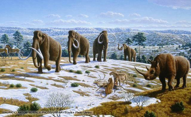 Mammals of the Pleistocene era. Artwork showing wildlife believed to have existed in the Northern Iberian Peninsula during the Upper Pleistocene era (125,000 to 10,000 years before present). These include horses (Equus caballus, left), woolly mammoths (Mammuthus primigenius, centre) and a woolly rhinoceros (Coelodonta antiquitatis, right). At centre right, cave lions (Panthera leo) are eating a reindeer (Rangifer tarandus).