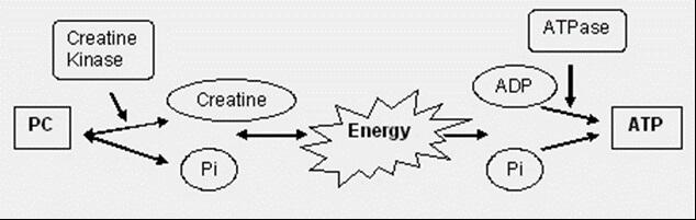 ATP-diagram