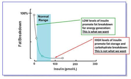 insulin-fat-breakdown