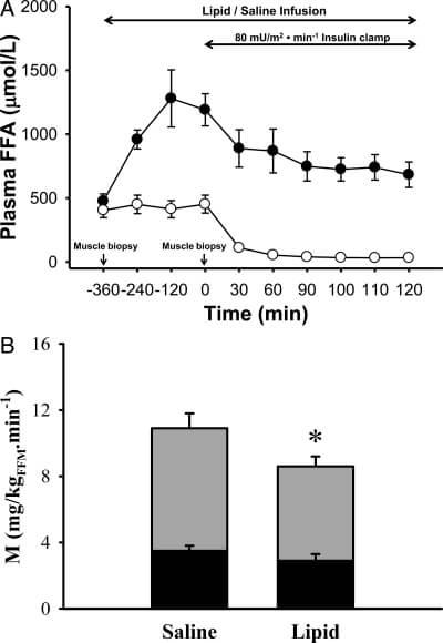 fat_insulin_resistance