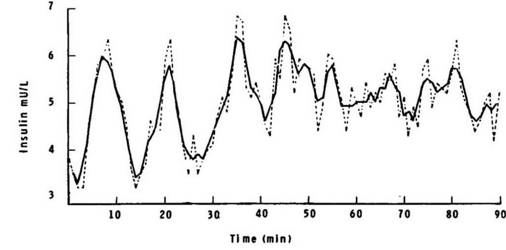 insulin_oscillation