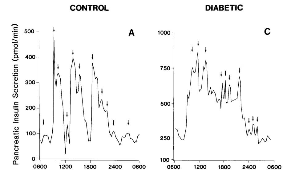 insulin_oscillation_long