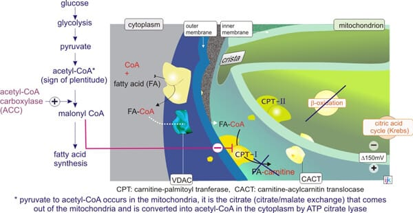 inhibition-of-CPT-I